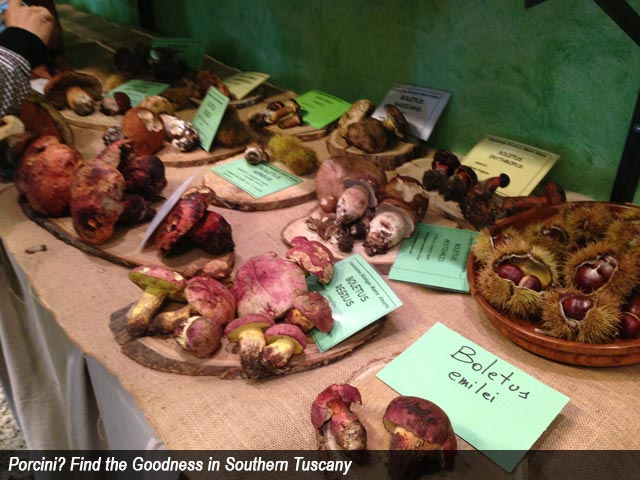 Porcini?  Find the Goodness in Southern Tuscany